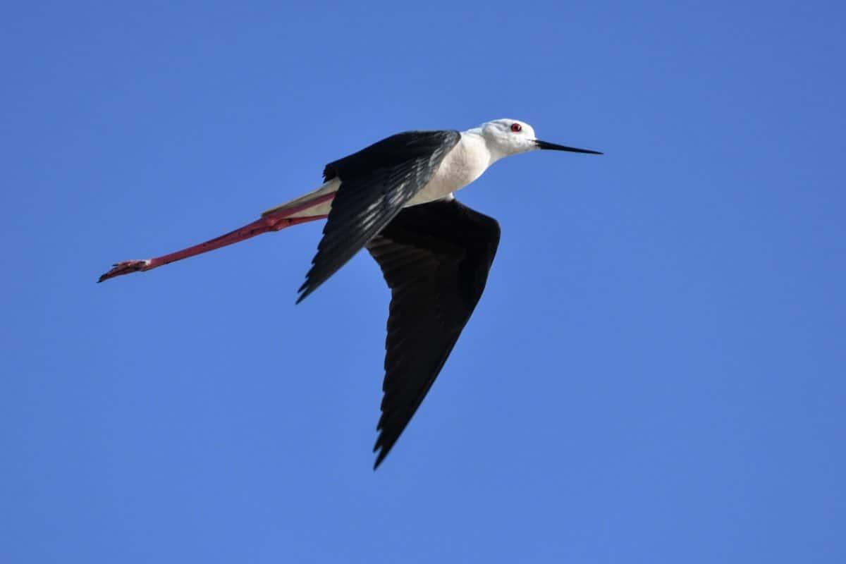 la faune, oiseau, bec, sauvage, plume