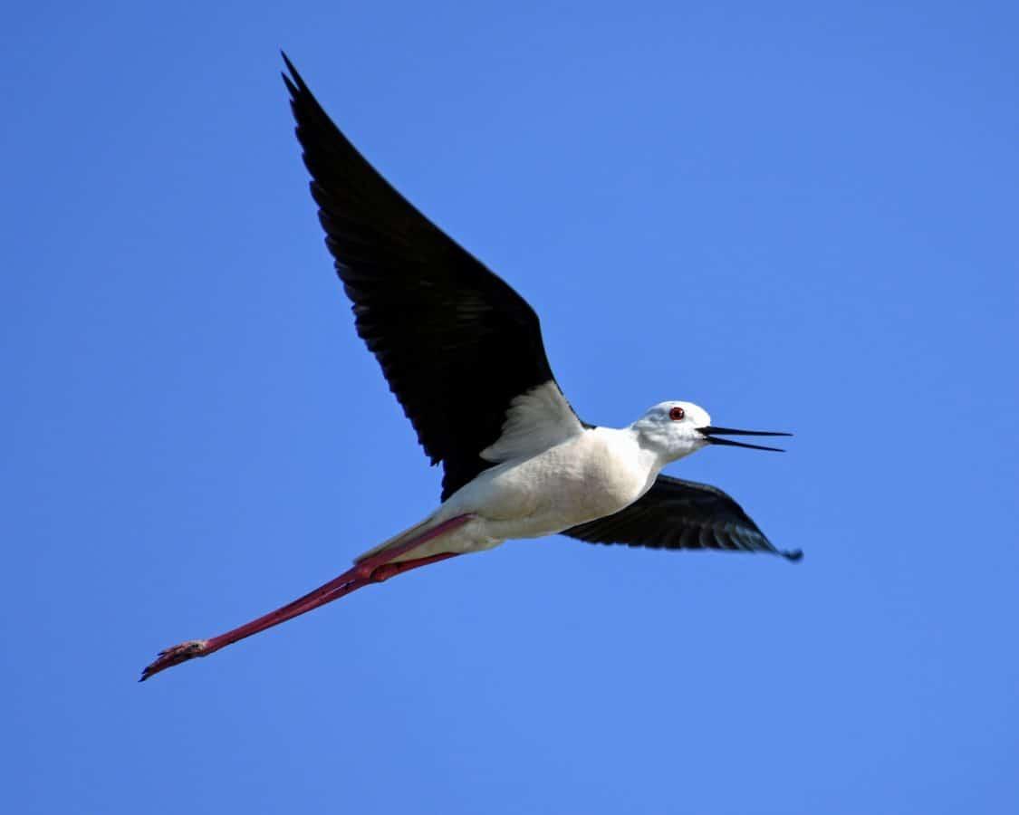 la faune, oiseau, bec, sauvages, ciel de plume, bleu