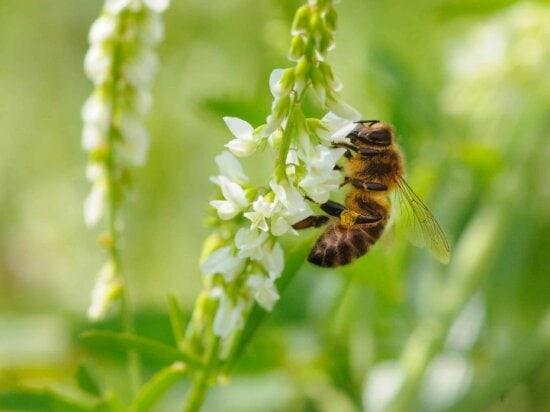nature, été, feuille, abeille, insecte, paysage, herbe