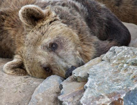 wild, stone, fur, wildlife, nature, animal, predator, bear