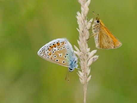 summer, nature, butterfly, wildlife, insect, animal, blue