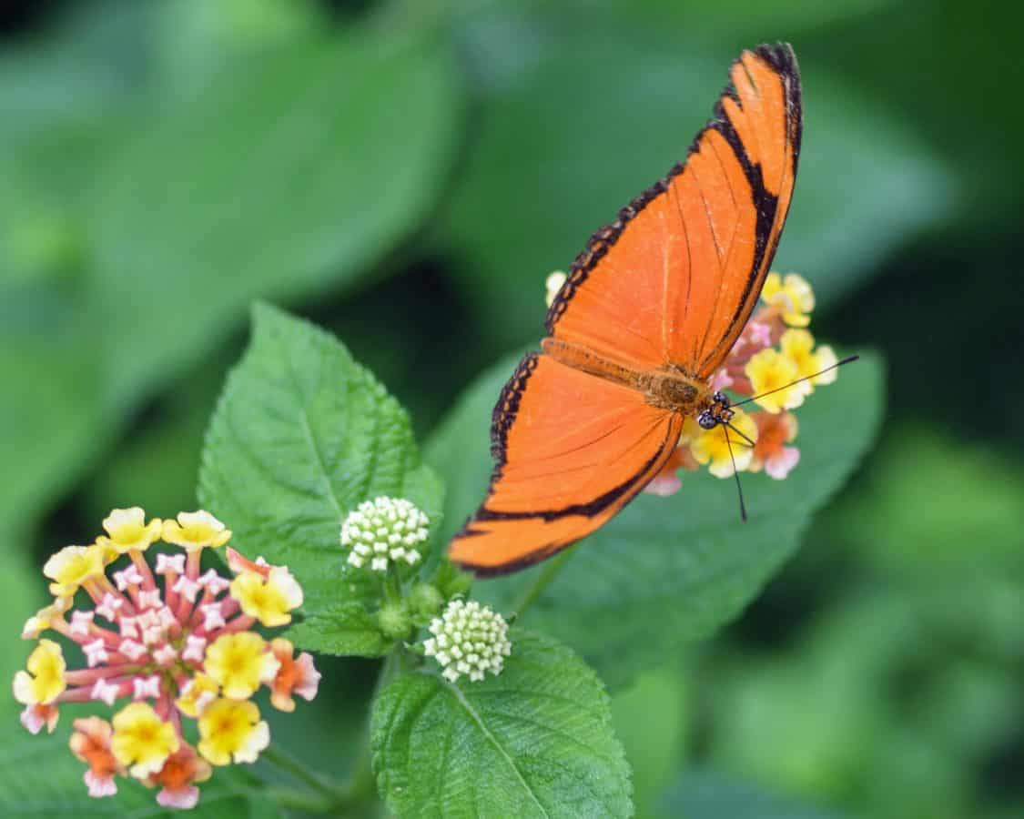 butterfly, nature, flower, summer, insect, plant, outdoor