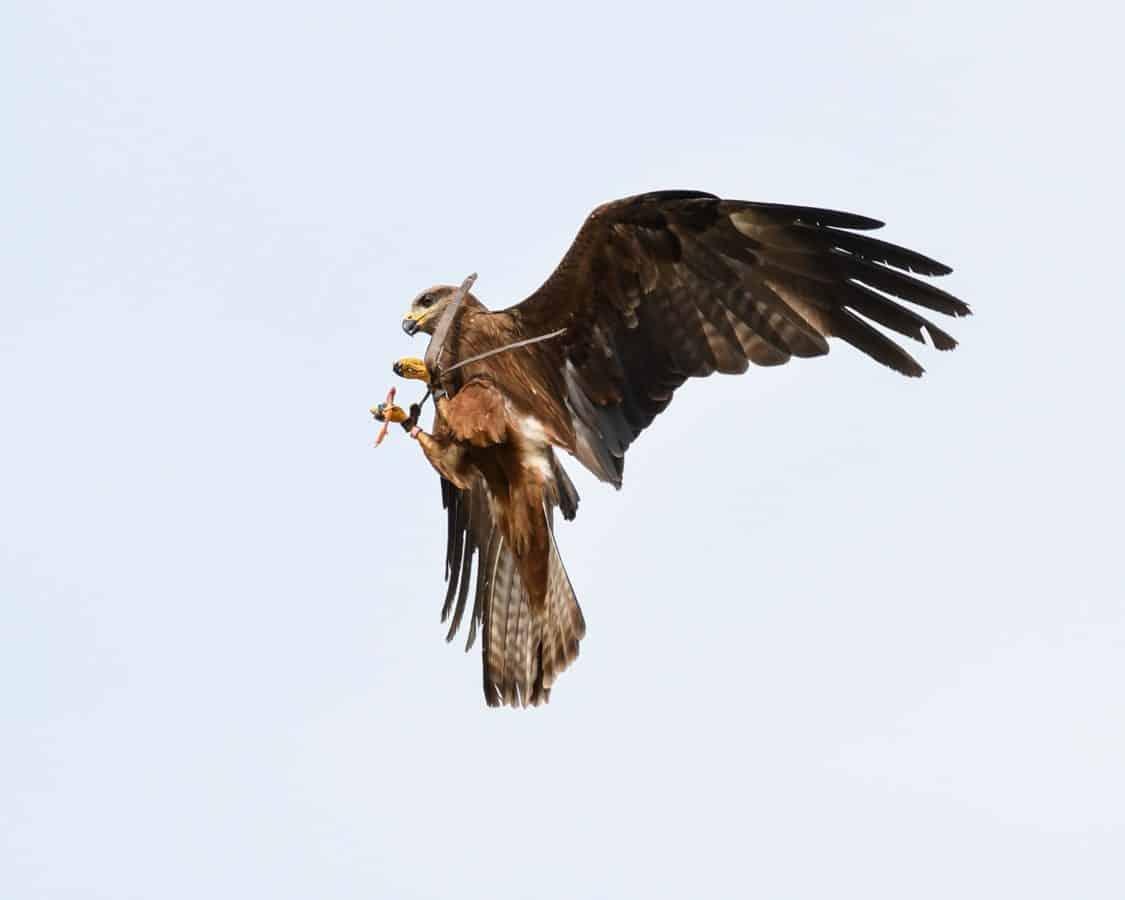 Tier, Schnabel, Vogel, Himmel, Tiere, Vogel, Hawk, Flug