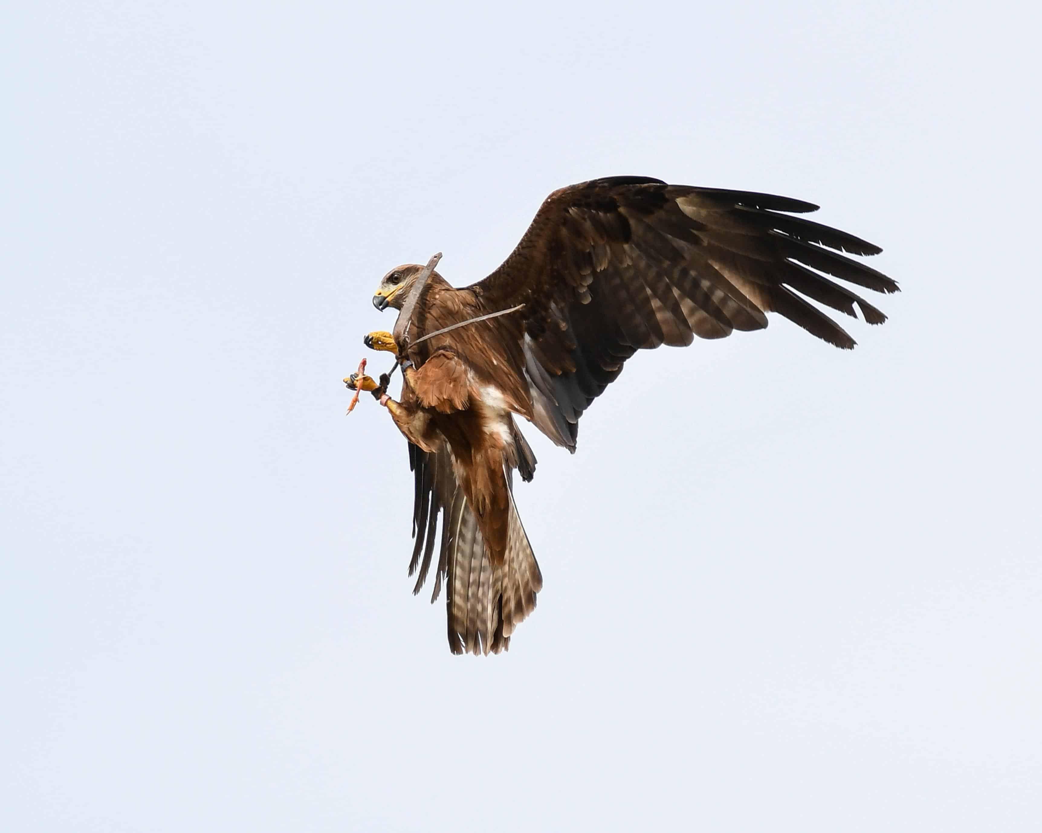 imagem gratuita animal bico pássaro céu animais selvagens aves