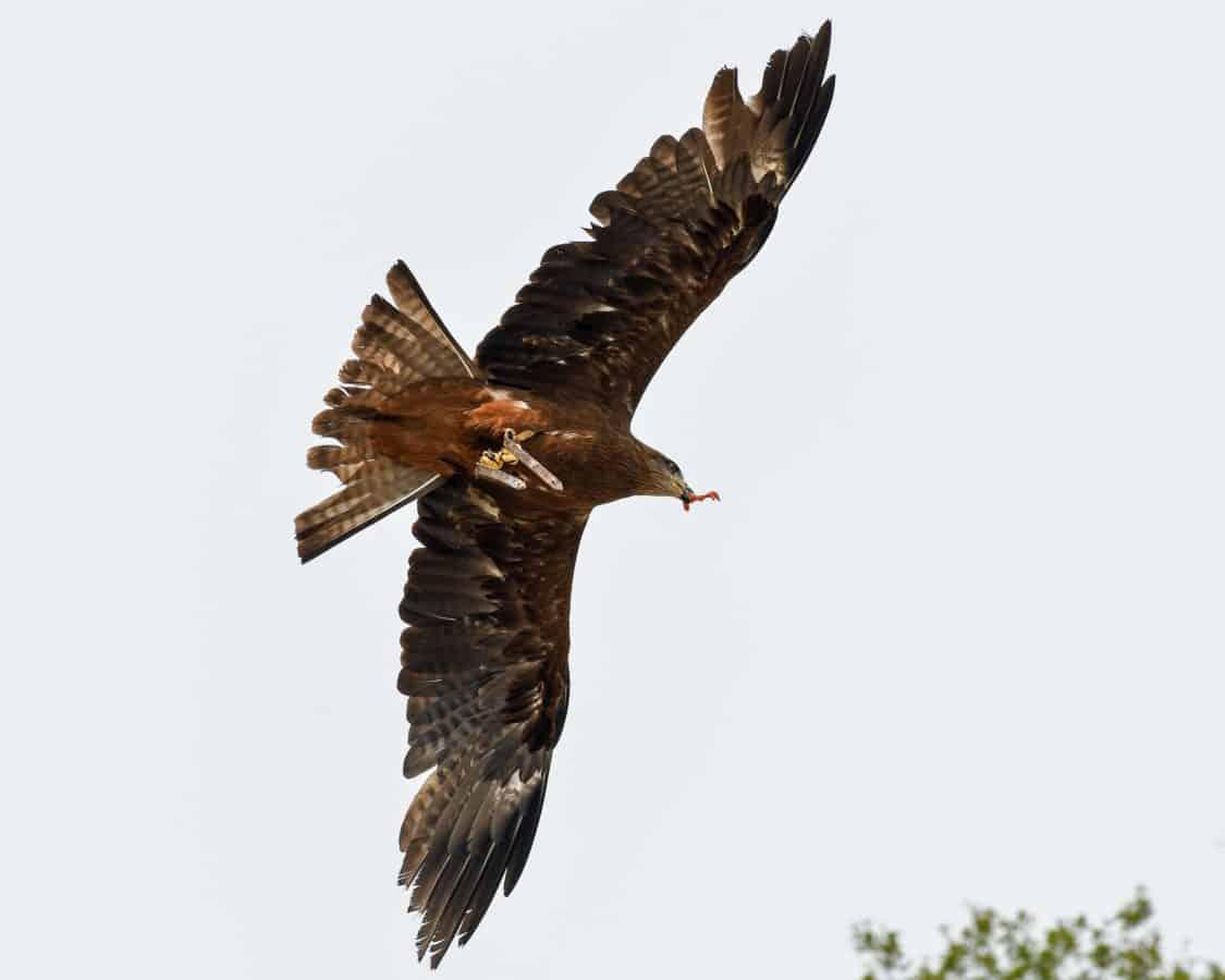дивата природа, птица, ястреб, животно, клюн, птица, небе