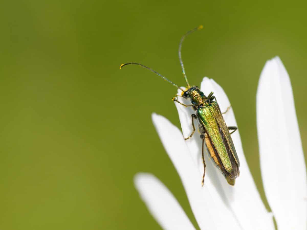 insecte, nature, été, fleur, plante, insecte, etamorphosis, invertébré