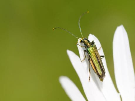 insect, nature, summer, flower, plant, beetle, etamorphosis, invertebrate