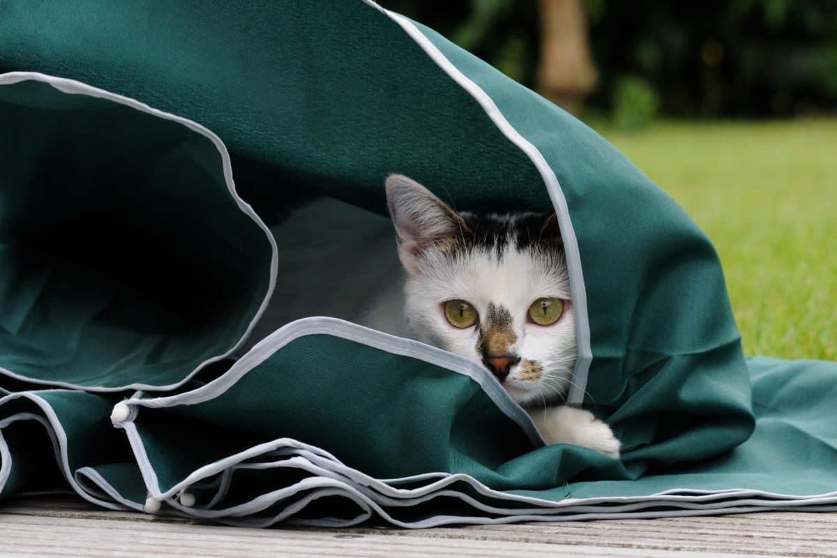 gatto, ritratto, animale animale, carina, carnivoro, in pelliccia, all'aperto