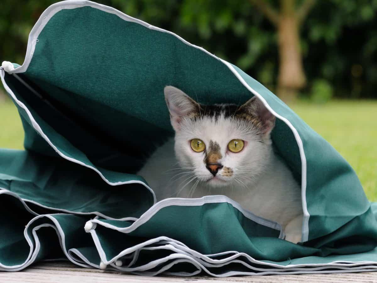 hierba verde, gato, animal, mascotas animales, al aire libre