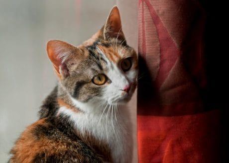 Retrato, mascotas animales, gato, pelaje, cabeza, Linda