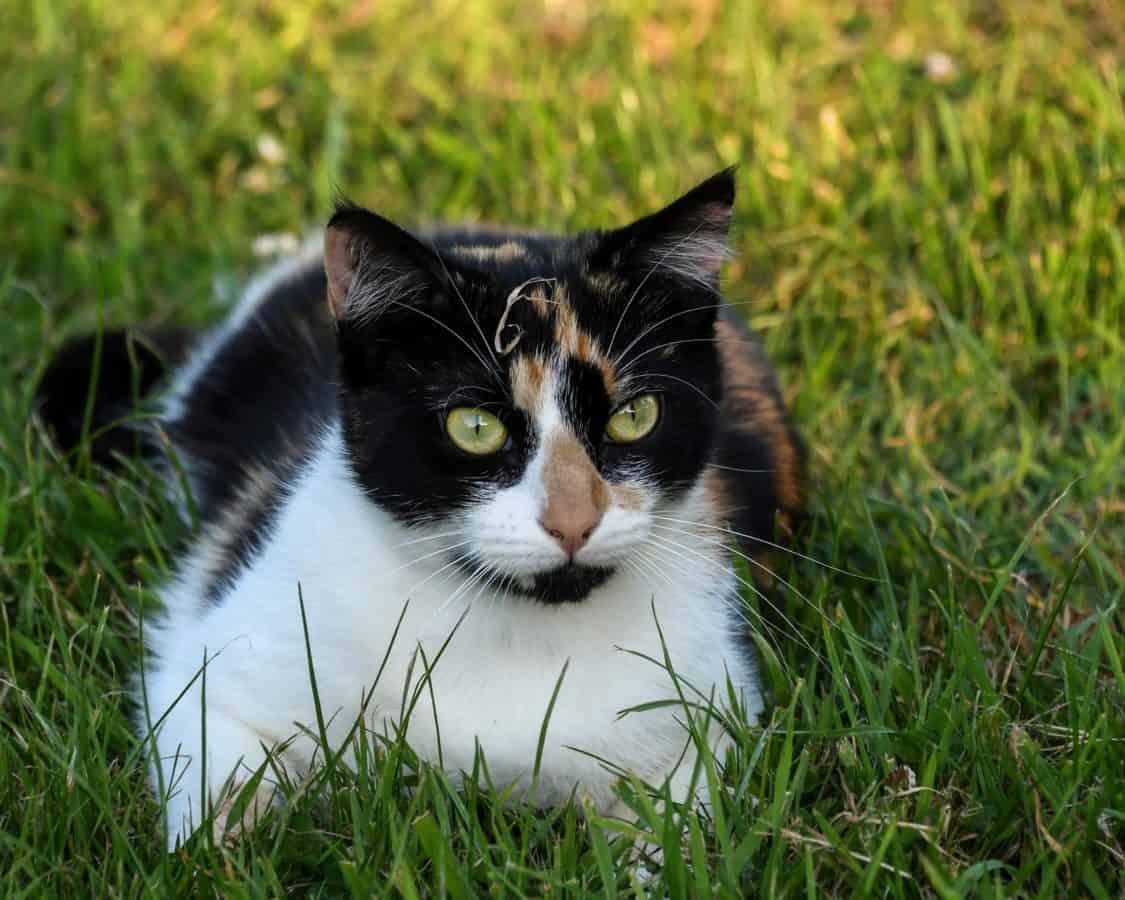 Grass, Katze, Kopf, Niedlich, Fell, Tier, Auge, im freien