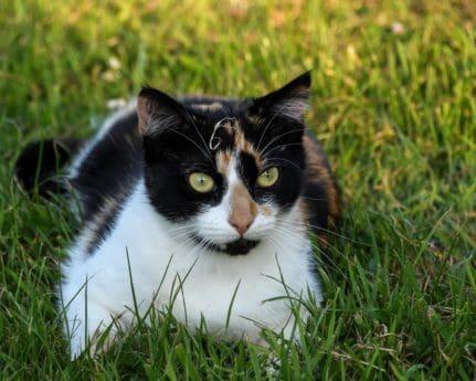 gress, katten, hodet, søt, pels, dyr, øye, utendørs