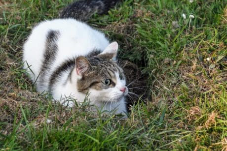 chat, herbe, mignonne, animale, nature, plein air