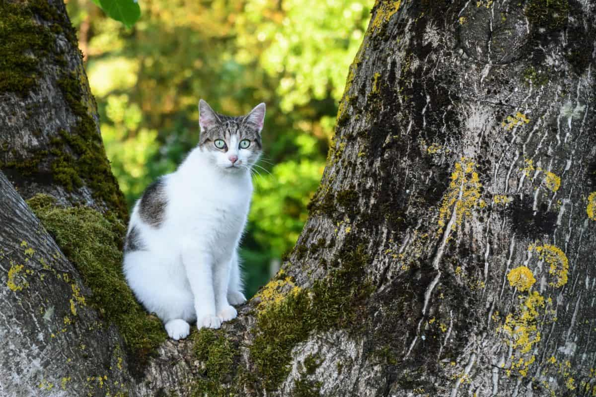 природата, дърво, дърво, бяла котка, открито, животните, пейзаж