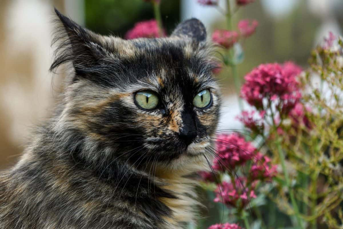 animal, eye, cute, dark cat, pet animal, fur, flowers, garden