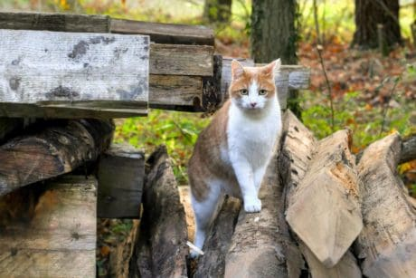 wood, nature, yellow, cat, feline, animal, fur, backyard