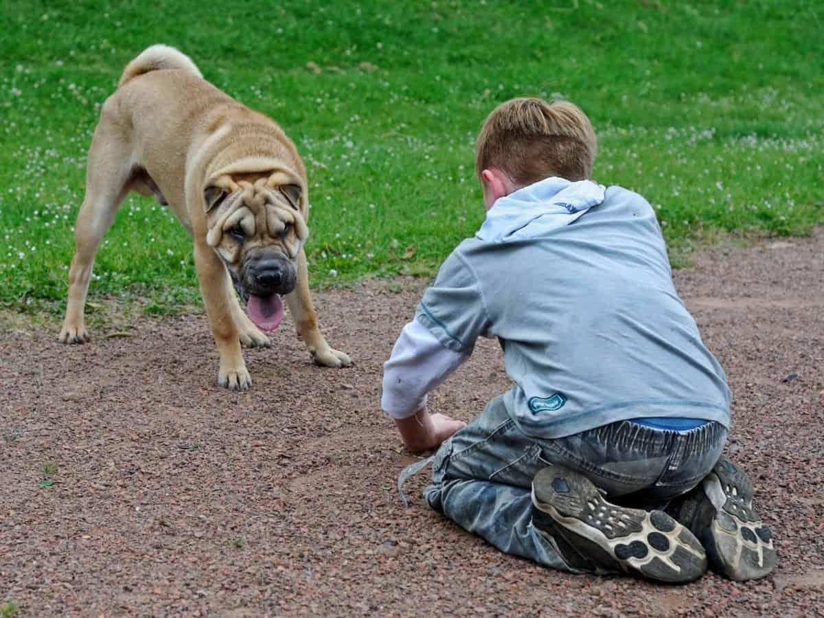 cane, ragazzo, bambino, erba, terra, all'aperto, erba