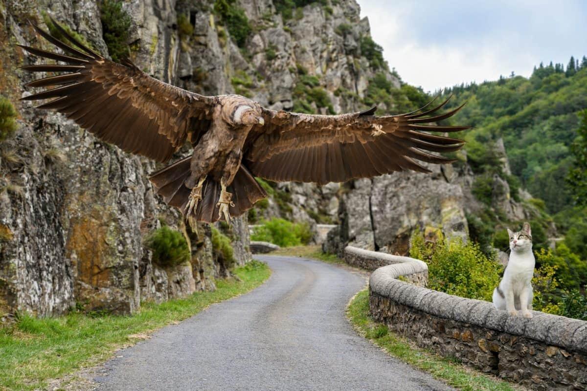 Cóndor, naturaleza, pájaro, árbol, camino, al aire libre, hierba, animales, aves rapaces, gatos