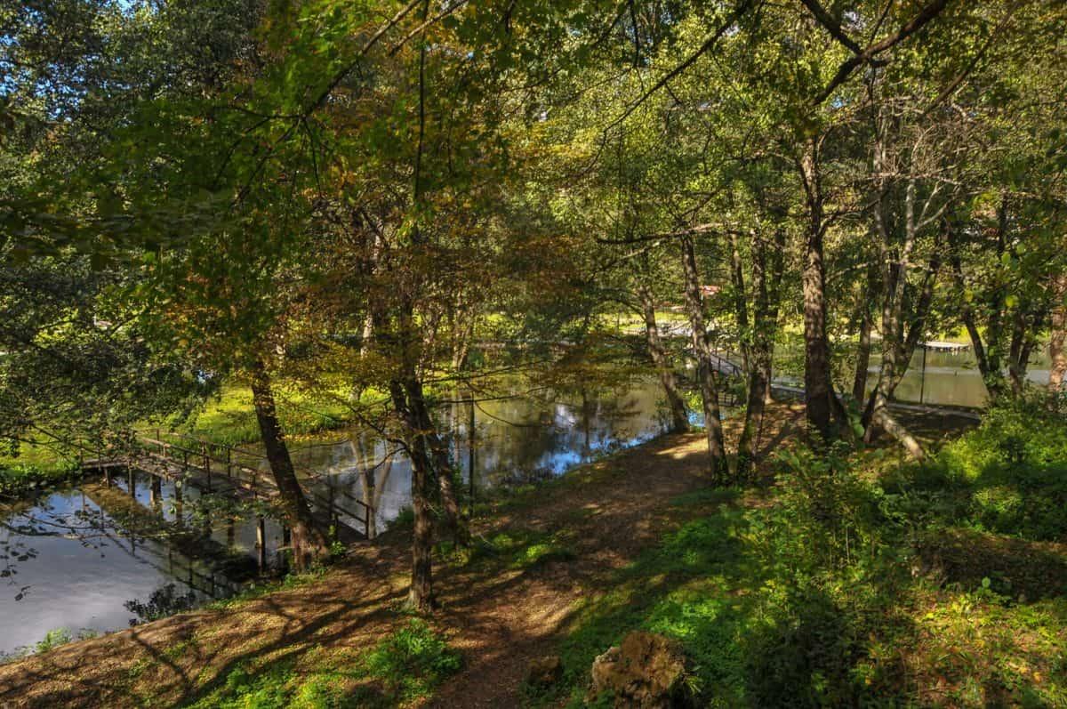 Blatt, Landschaft, Baum, Sommer, Natur, Holz, Wasser, Wald