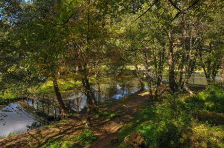 feuille, paysage, arbres, été, nature, bois, eau, forêt