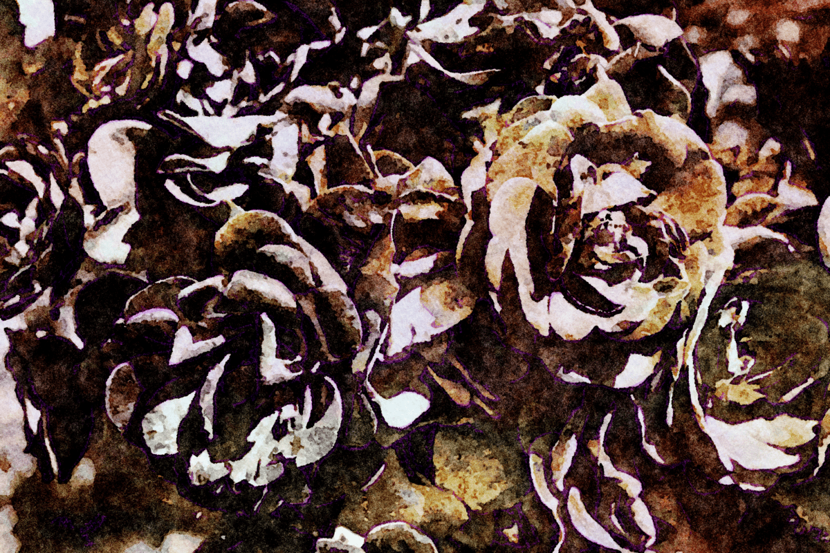 photomontage, brown, rose, flower, detail, dark, shadow