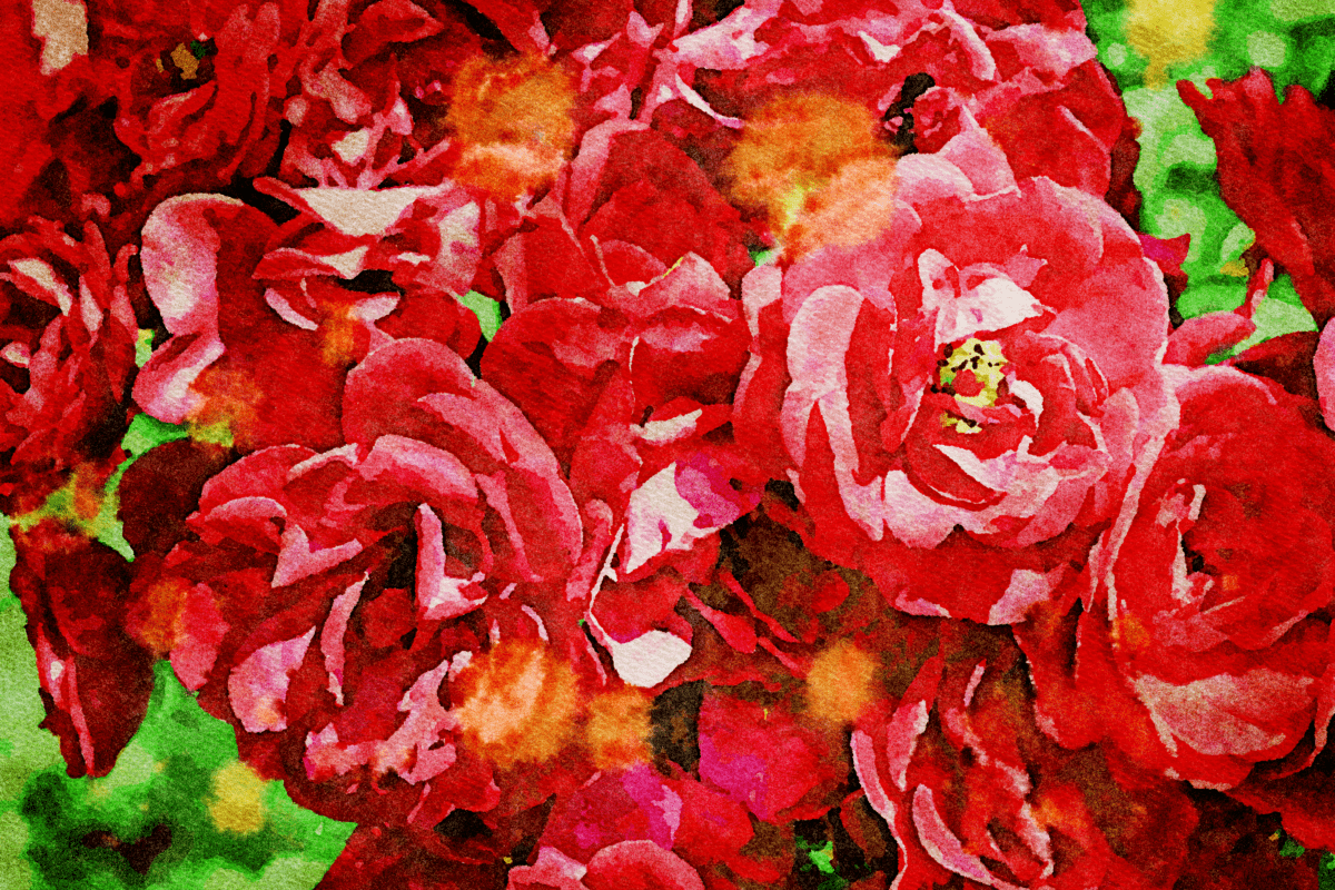 photomontage, rose, jardin, art, feuille, nature, flore, fleur