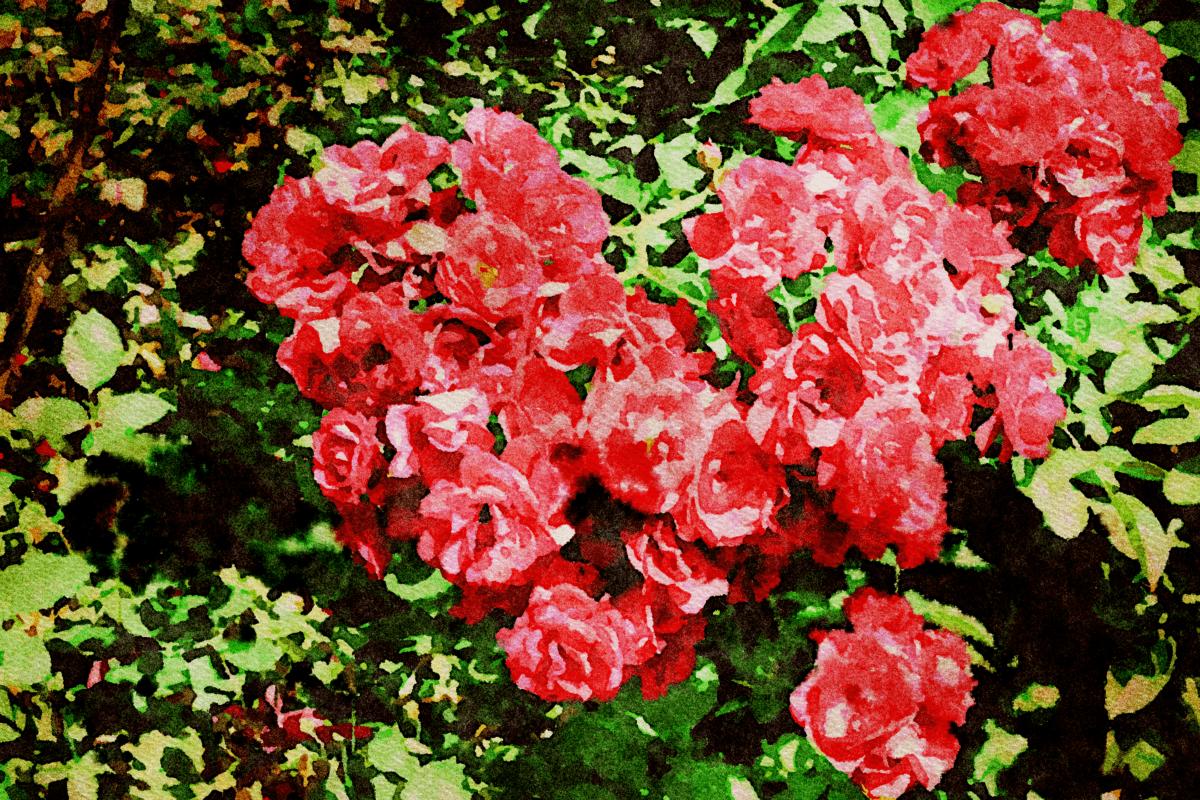 Textil, colorato, flora, natura, giardino, foglia, rosa, estate, fiore, pianta