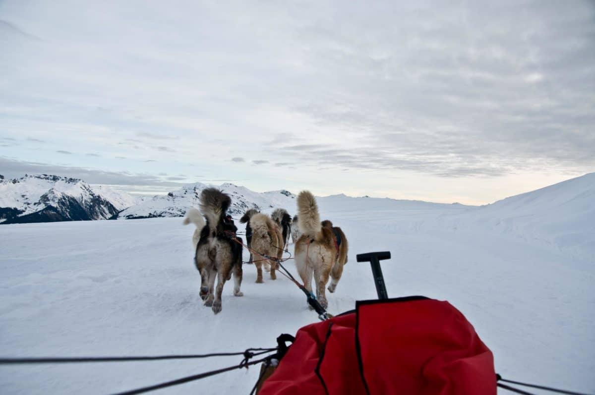 hundeslæde, hund, vinter, landskab, mountain, sne, kulde, sky, udendørs