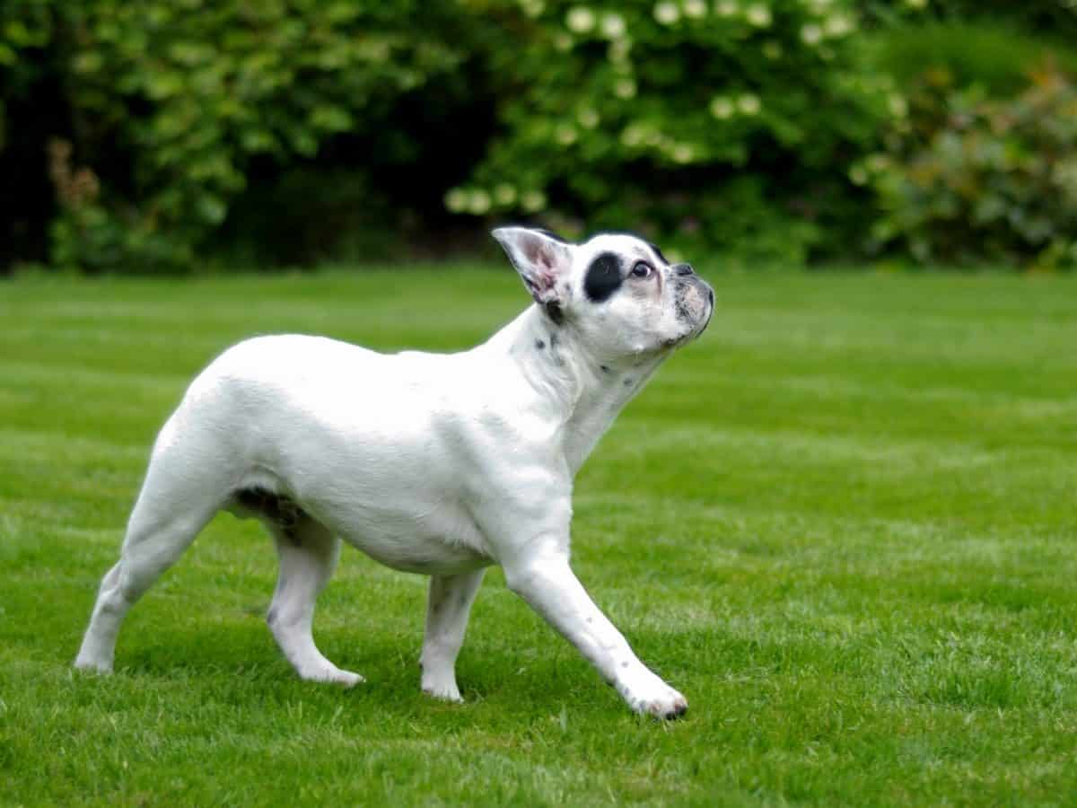 canine, mignon, animal animal de compagnie, chien, herbe, chiot, arbre, extérieur, sur le terrain