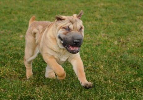 cane, carino, pet, animali, erba, cucciolo, ritratto, all'aperto, canino