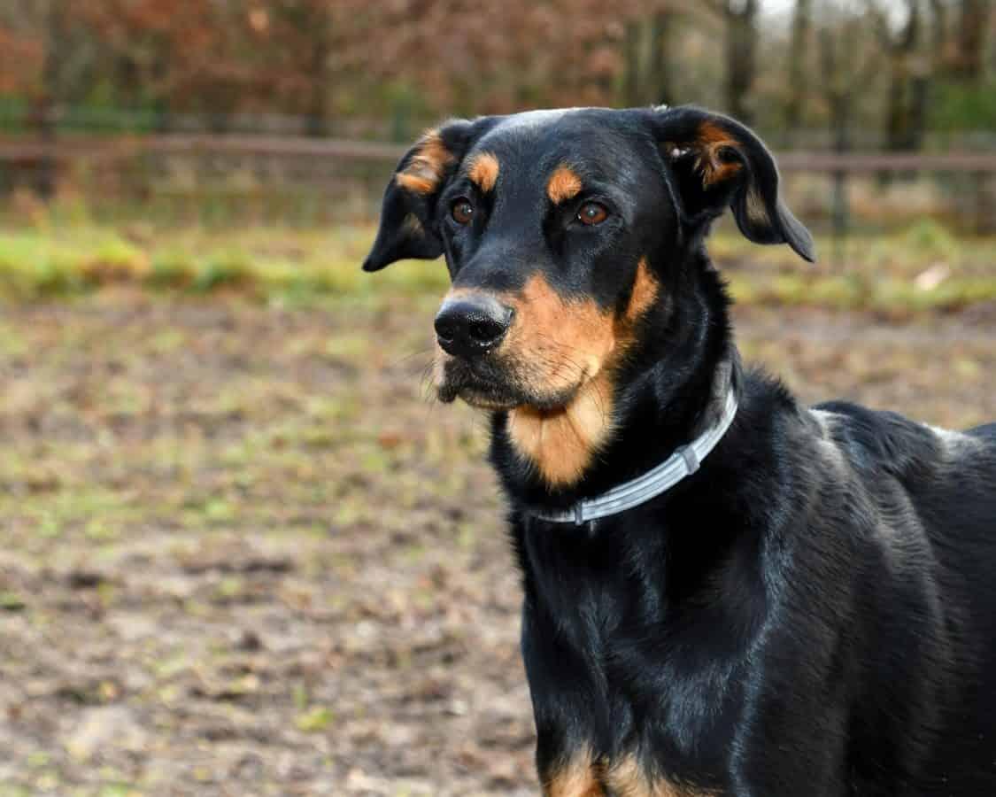 chien canin, mignon, portrait, noir, herbe pour animaux de compagnie, animal, en plein air