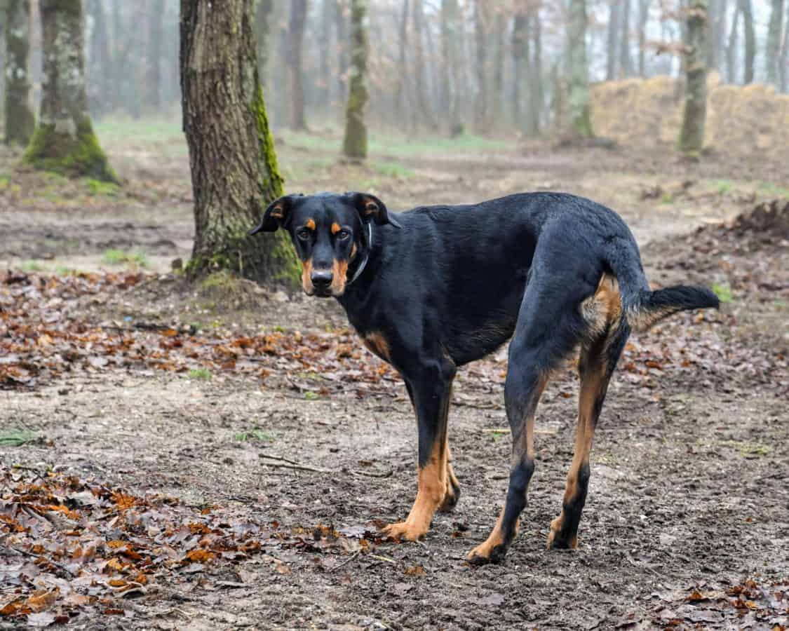eckzahn, Wald, Natur, Landschaft, Tier, Tier, Hund, outdoor, Baum, Rasen