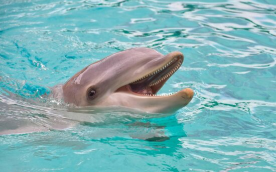 fish, dolphin, water, underwater, sea, ocean, animal