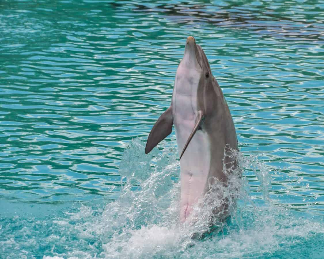 mer, eau, saut, dauphins, océan, plein air, animaux