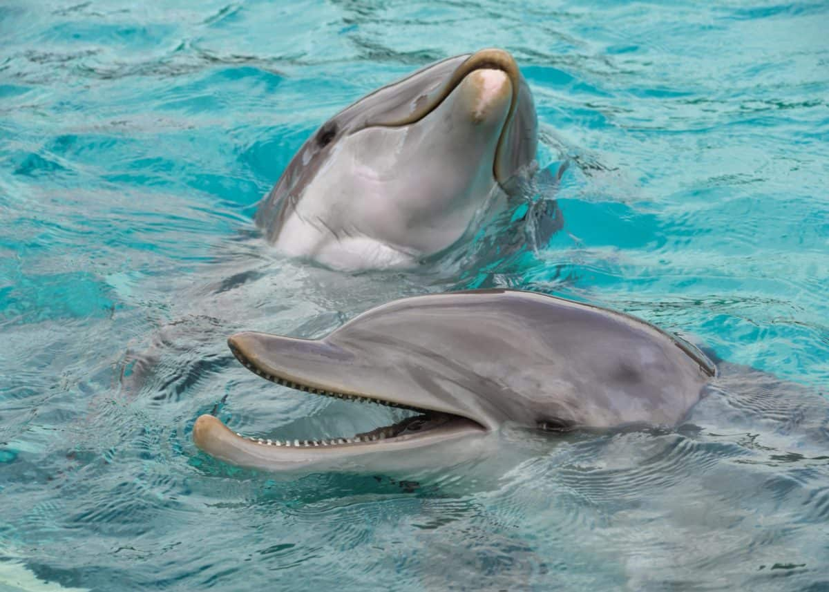 Ocean, under vandet, vand, delfin, svømme, dyr, hoved