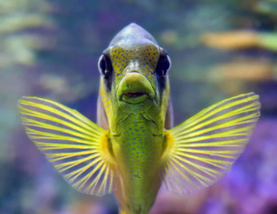 riba, voda, morska riba, akvarij, prirode, oceana, podvodni, egzotične