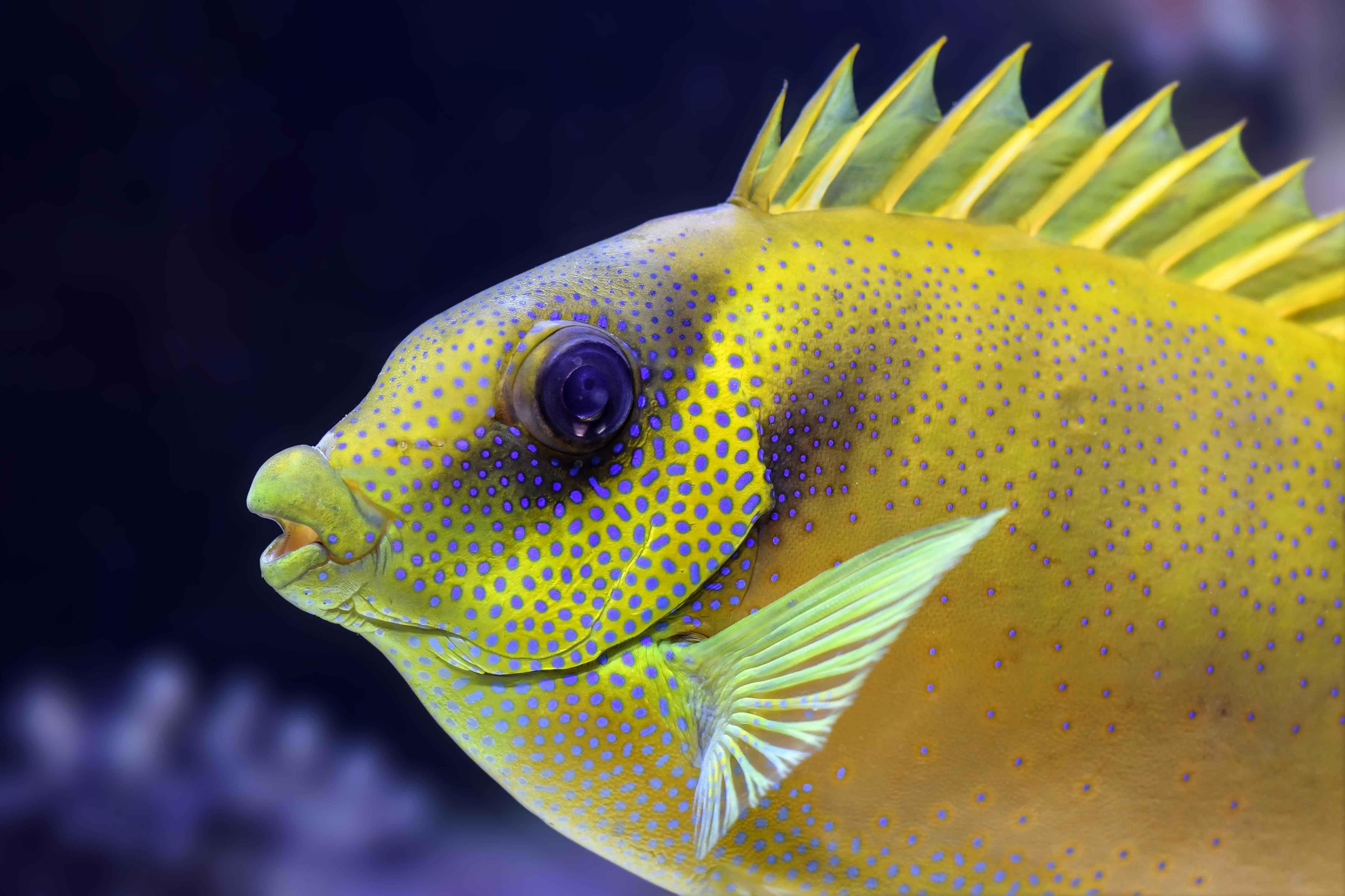 Картинки про рыбы