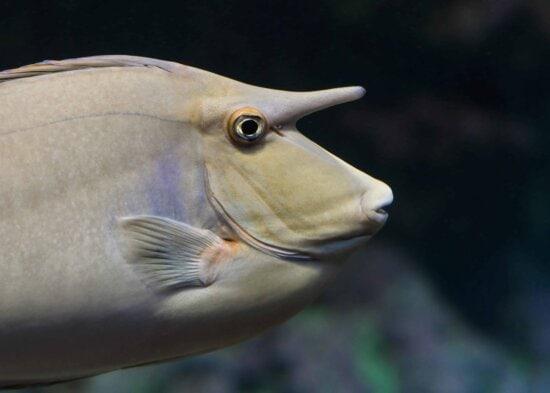 saltwater fish, underwater, fish, animal, water, wildlife