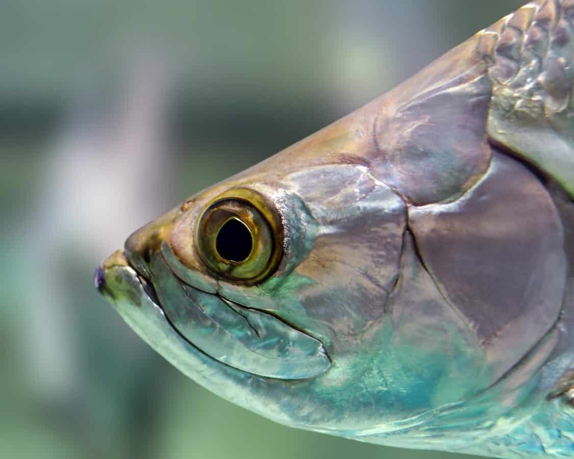 fish, nature, sea, animal, head, eye
