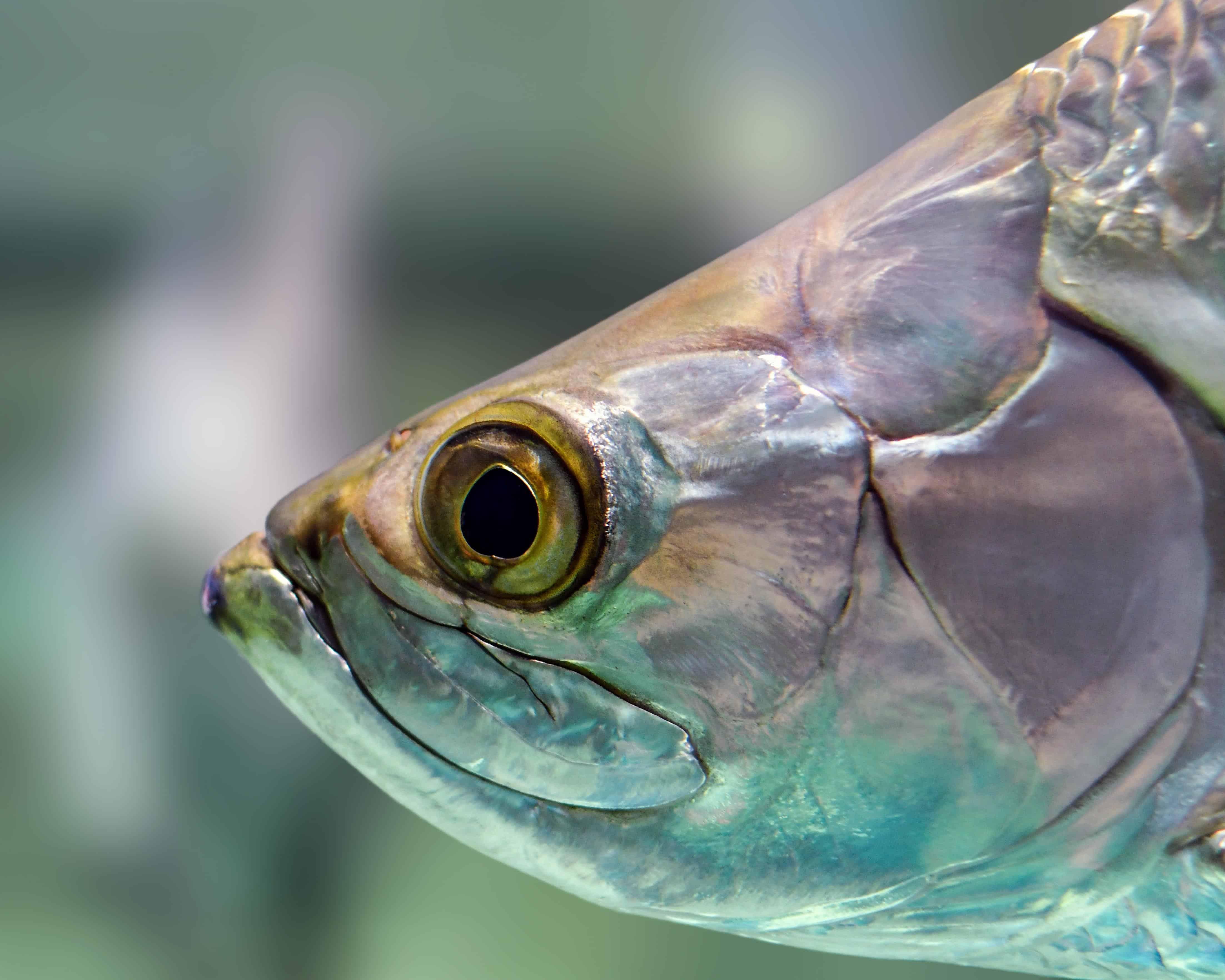 Голова рыбы картинка для детей