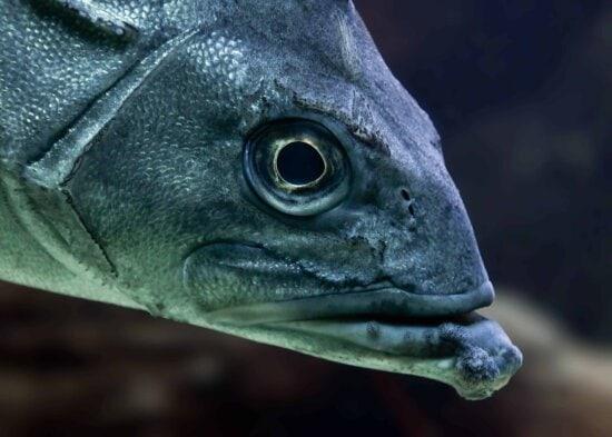 nature, fish, eye, animal, head, eye, daek, undwerwater