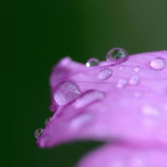 nature, summer, leaf, dew, flora, flower, garden, rain, wet