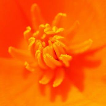 jardín, naturaleza, verano, Pétalo, flor, polen, flora, plantas