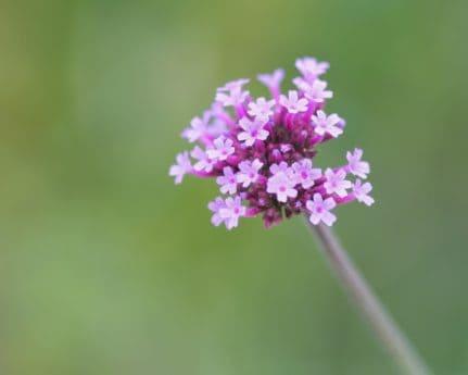 flor, hoja, flora, naturaleza, verano, planta