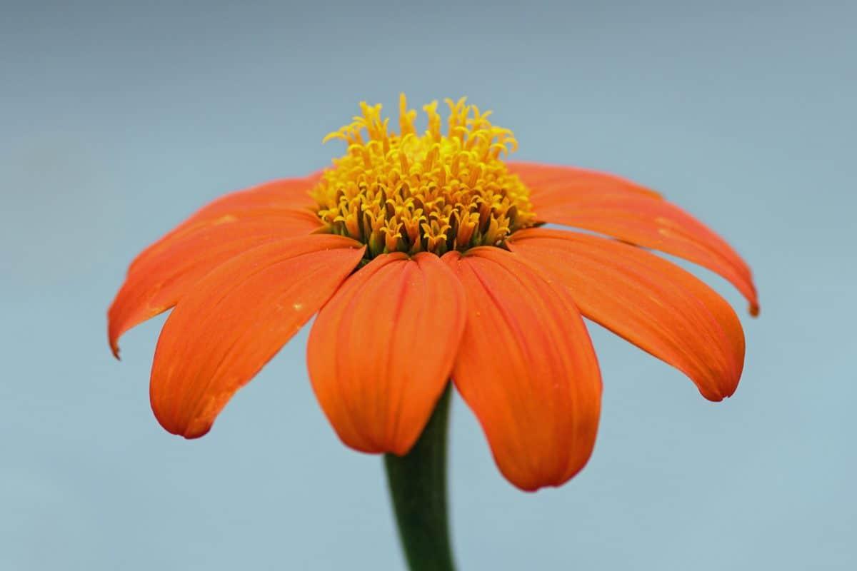 цвете, лято, природа, флора, небе, завод, плодник, детайл