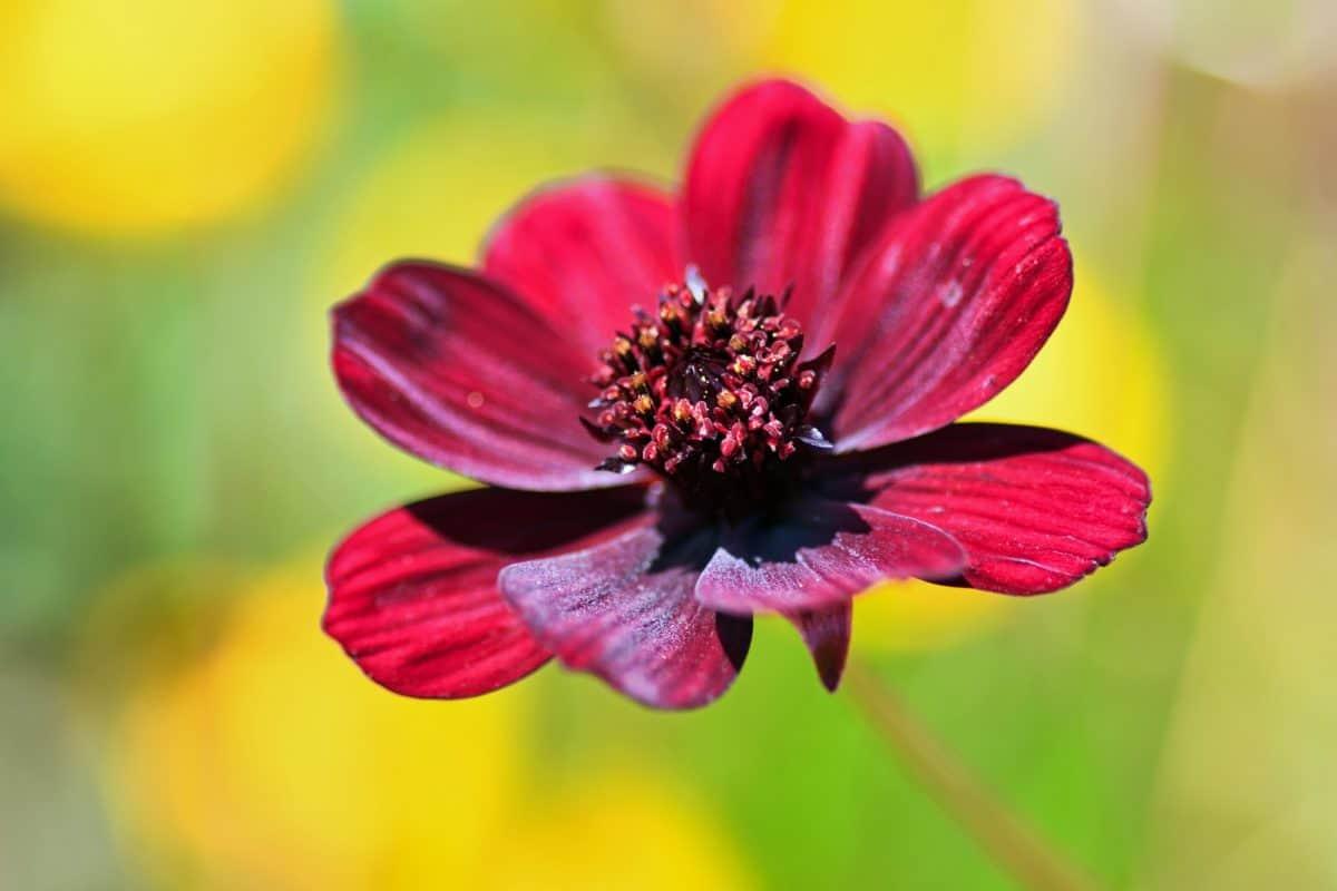 květiny, léto, příroda, flora, rostlin, makro, pestík, detail