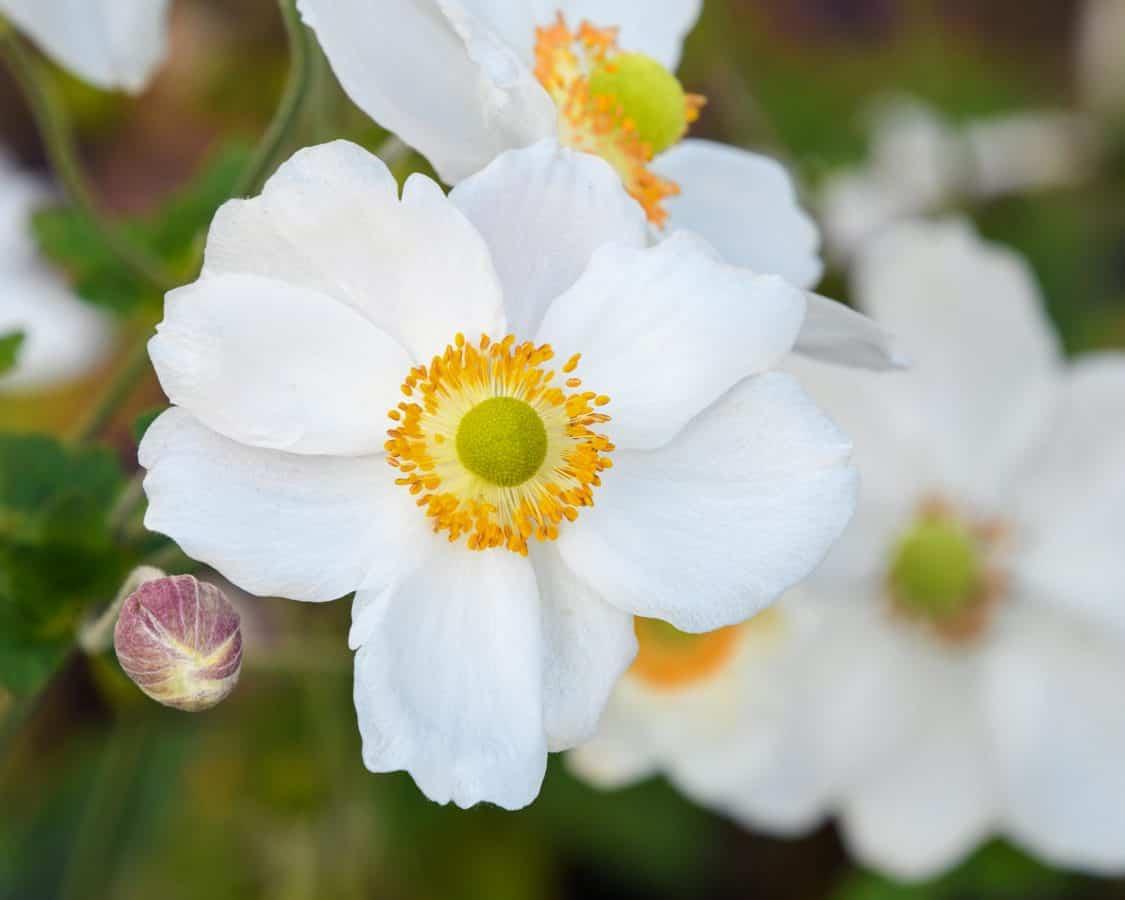 Natur, Garten, Blüte, Blume, Flora, Blatt, Pflanze, Blüte