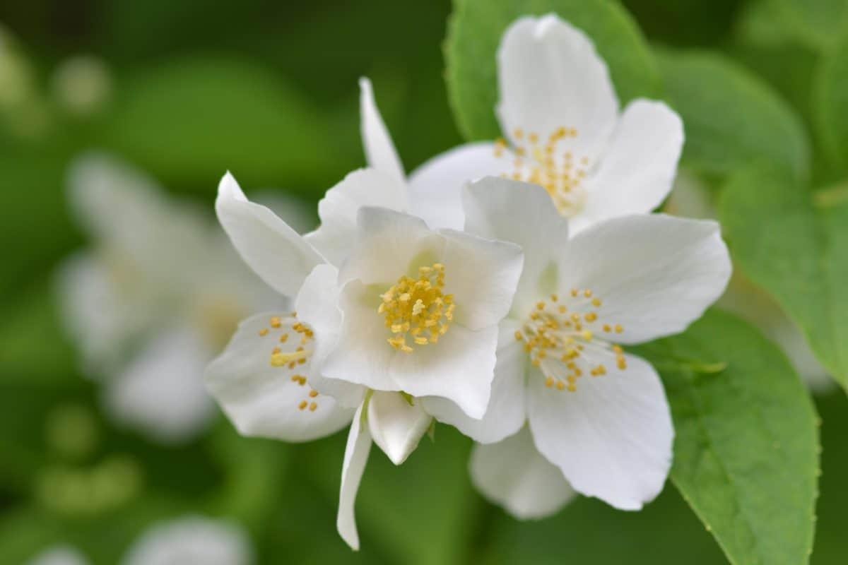 fiore, foglia, natura, flora, estate, pianta, fiore, primavera