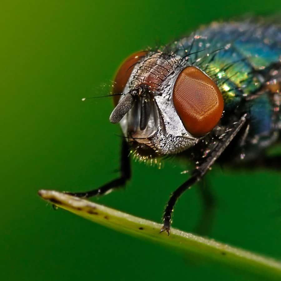 ojo, macro, insectos, naturaleza, biología, invertebrados, animales, fauna