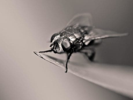 monochrome, macro, insect, wildlife, nature, biology, invertebrate, animal